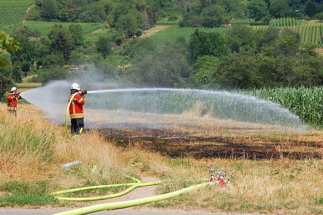 Feuerwehr verhindert Flächenbrand gegenüber dem Vitra-Haus in Weil am Rhein