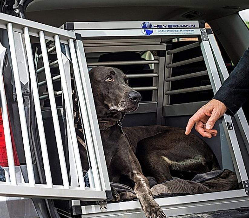 In einer Box reist es sich für Vierbeiner am sichersten.  | Foto: Christoph Schmidt (dpa)