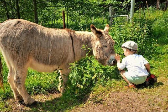 Dieser Prechtaler Ferienhof ist ein Paradies mitten im Schwarzwald