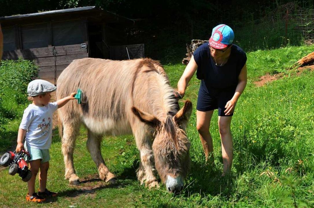 Zwei Esel gehören zum Hof, die lieben ...t zu werden. Gerade macht das Frederik  | Foto: Silke Kohlmann