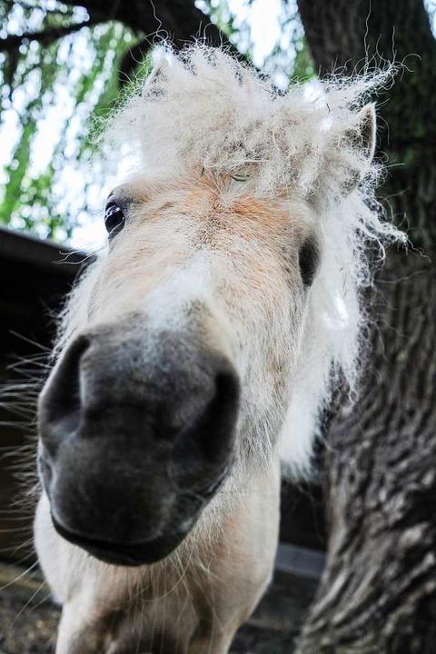 Die Lustigste: Eigentlich könnte man m...orgt für viel Erheiterung im Tierheim.  | Foto: Andrea Schiffner