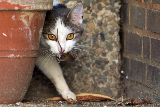Wie Tierschutzvereine das Problem mit verwilderten Katzen angehen
