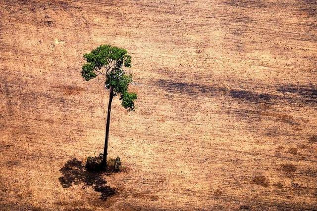 Am Amazonas wächst der Widerstand gegen Bolsonaro
