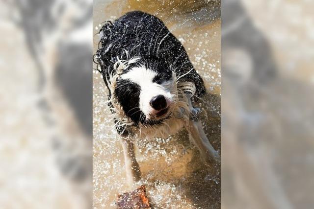 Die Hitze kommt pünktlich zu den Hundstagen