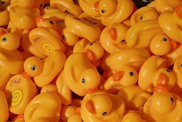 2200 Plastikenten schwimmen beim Schlossfest in Kirchzarten für einen guten Zweck