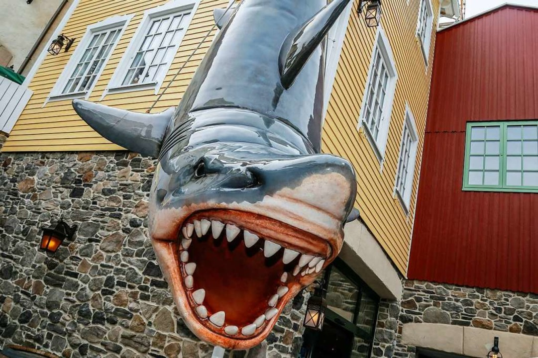 Das beliebte Fotomotiv: Der Hai – neu angefertigt und an neuer Stelle.  | Foto: Sandra Decoux-Kone