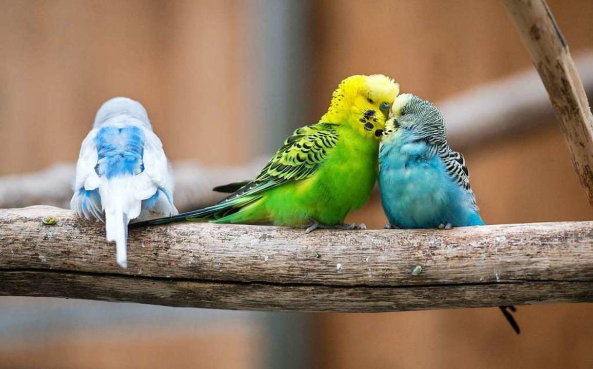 Tiere zu untersuchen und ihr Verhalten...ereichen von Biologinnen und Biologen.  | Foto: Silas Stein