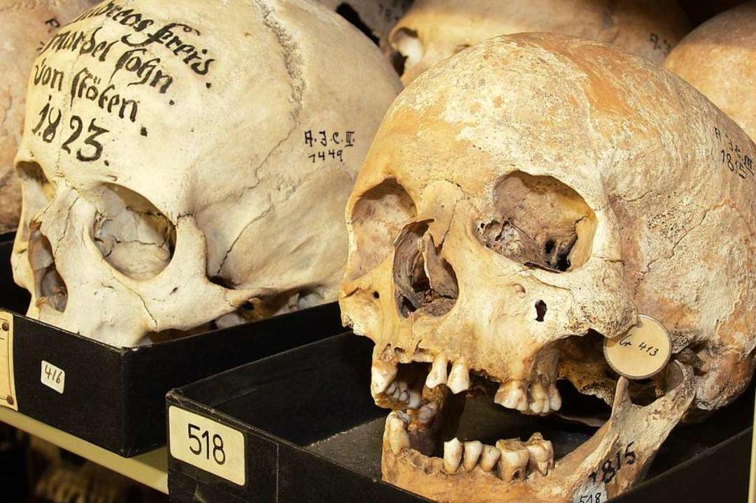 Viele Schädel der ehemaligen Alexander...rsitätsarchiv aufbewahrt. (Symbolbild)  | Foto: Thomas Kunz