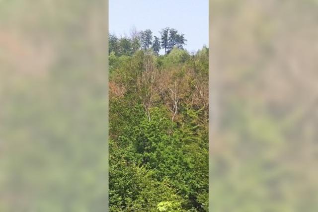 Wälder der Ortenau im Klimastress