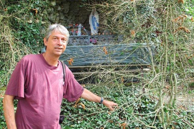 Die Zukunft des Buchswaldes in Grenzach-Wyhlen ist ungewiss