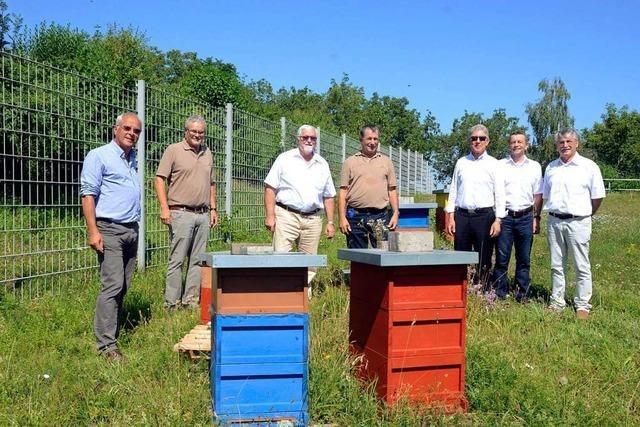 Auf dem Galgenberg ist eine Heimat für sechs Bienenvölker entstanden