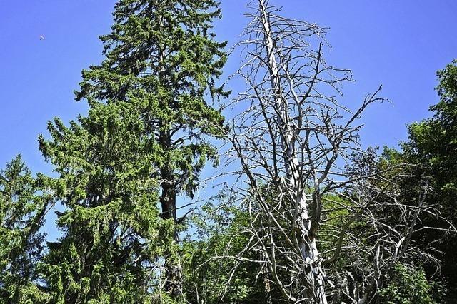 Ausmaß der Schäden ist in Todtnaus Wäldern neu