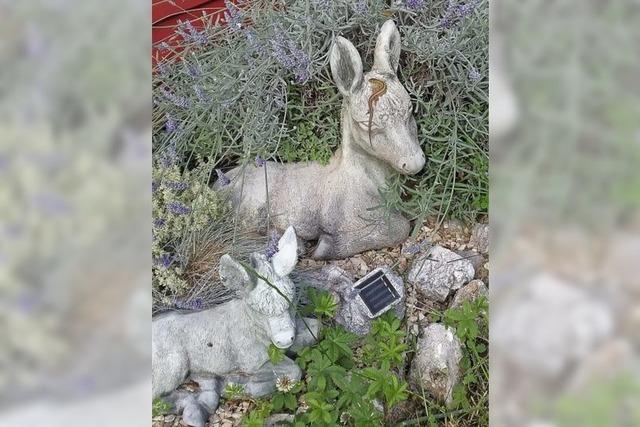 Eidechse und Esel lassen sich auf einem Bild blicken