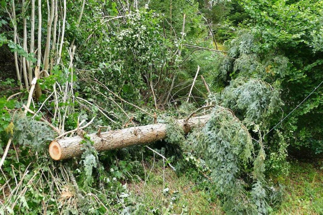 Noch am Freitagabend räumten die Einsa...e umgestürzten Bäume von der Fahrbahn.  | Foto: Juliane Kühnemund