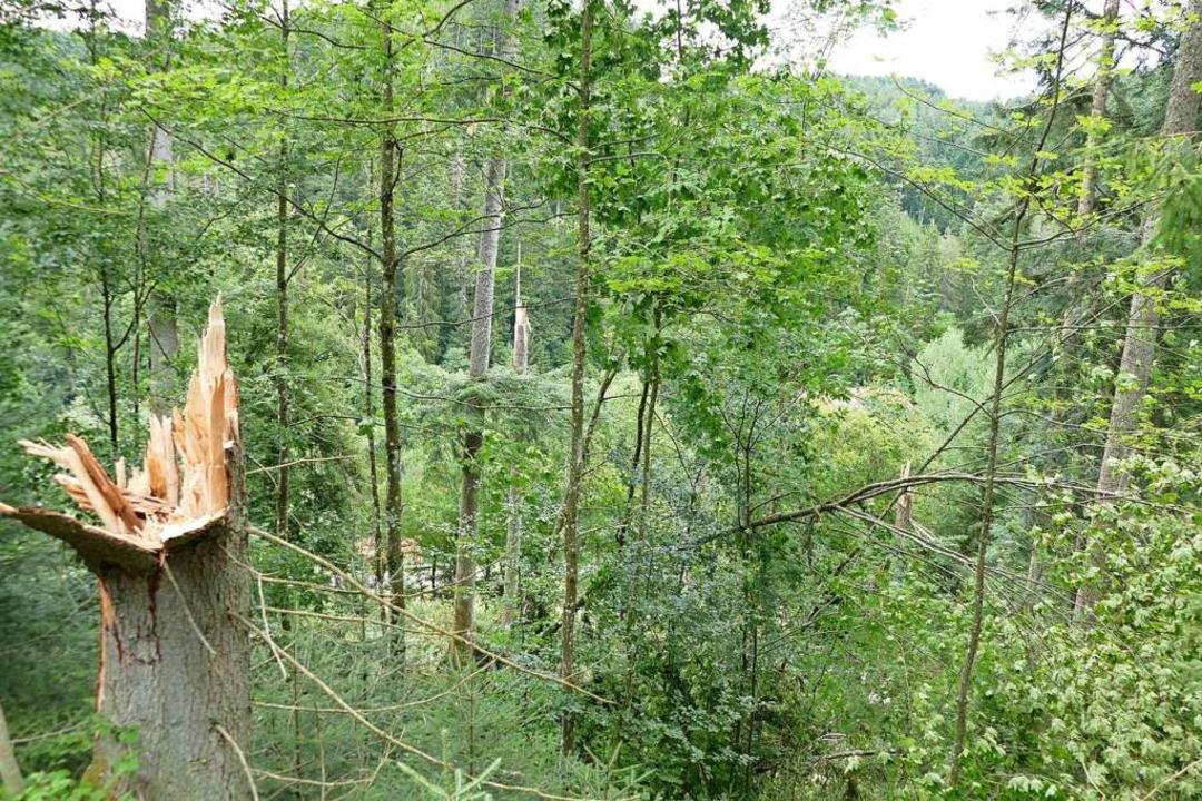 Der Tornado hat die Bäume wie Streichhölzer abgeknickt.  | Foto: Juliane Kühnemund