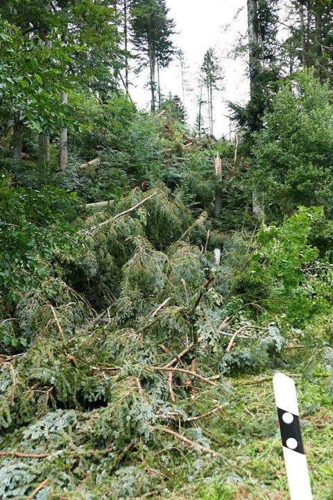 Wo der Tornado wütete, steht kein Baum mehr.  | Foto: Juliane Kühnemund