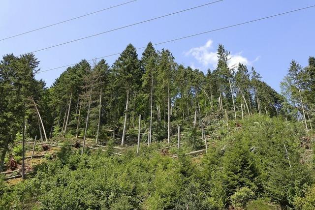 Der Wald ist einmal mehr gebeutelt