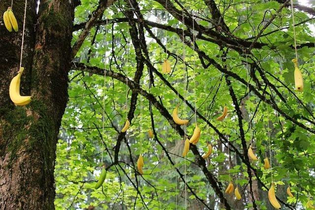 Der Kunstweg im Wald von St. Peter zeigt Werke regionaler Künstler