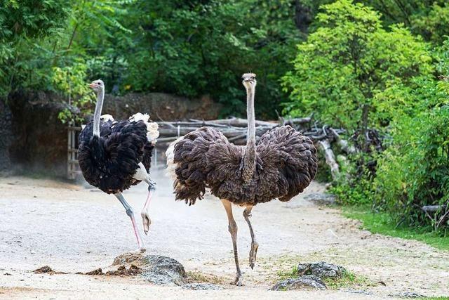 Zu gewinnen: Familien-Tageseintritte für den Zoo Basel