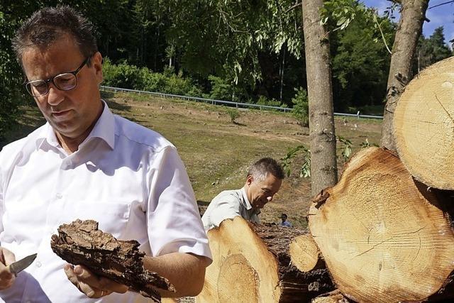 Viele Waldbesitzer resignieren
