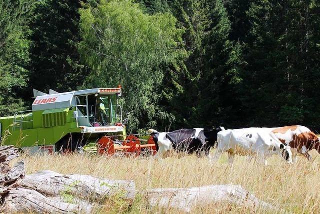 Mähdrescher kurven für die Wildblumenvielfalt über Wiesen im Schwarzwald