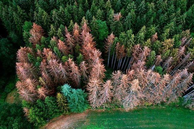 Das Land verliert seine heimischen Baumarten