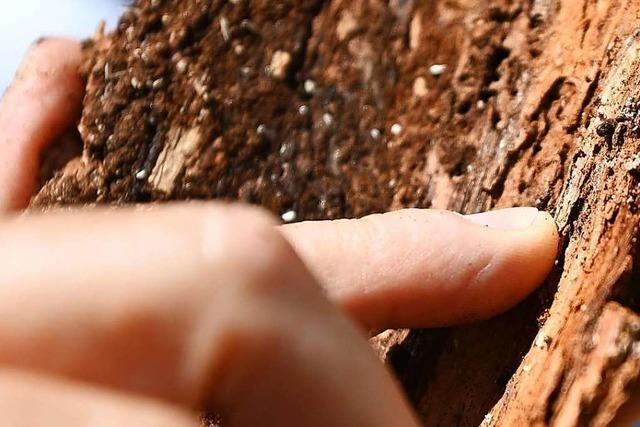 Warum das Waldsterben heute anders ist als in den Achtzigern