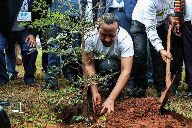 Äthiopien pflanzt 353 Millionen Bäume