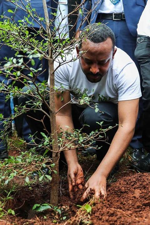 Regierungschef Abiy Ahmed beim Pflanzen eines Baumes  | Foto: privat