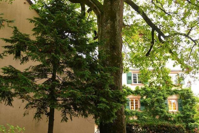 Weils OB Dietz will tausend Bäume in zehn Jahren pflanzen
