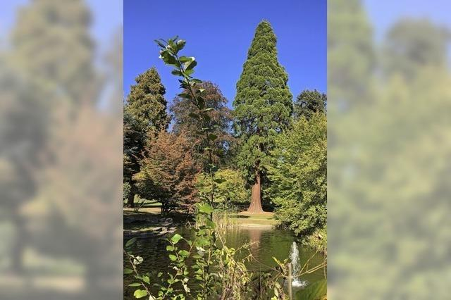 Markante Bäume im Stadtgarten Emmendingen