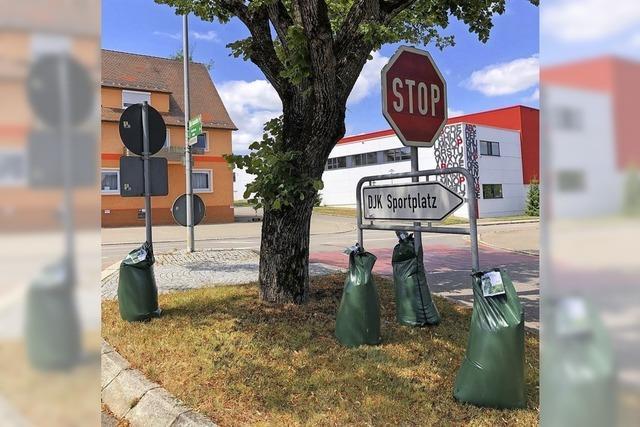 Grüne Beutel als mobile Bewässerung