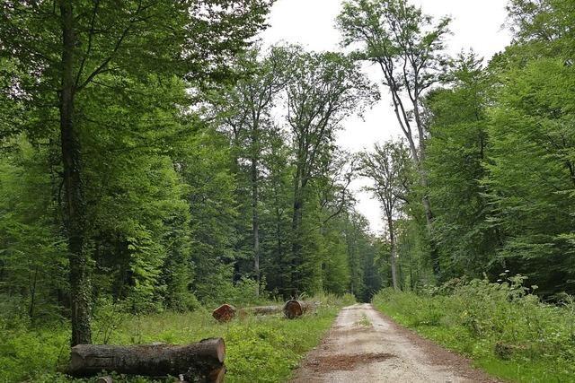 Resistente Bäume gesucht