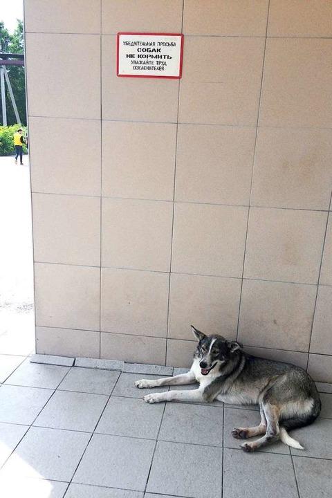 Ein Hund vor der Kantine des Akw    Foto: Stefan Scholl