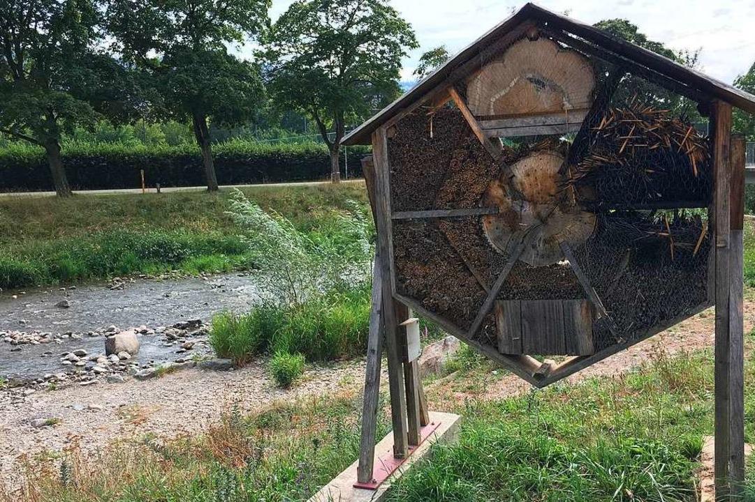 Das beschädigte Insektenhotel an der Dreisam  | Foto: Carolin Buchheim