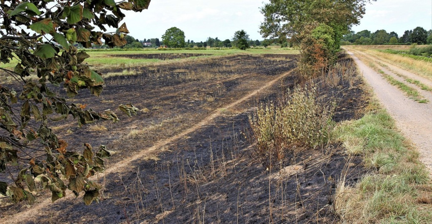 So sieht es nach dem Flächenbrand bei ... Feuerwehr hat Schlimmeres verhindert.  | Foto: Konrad Saier