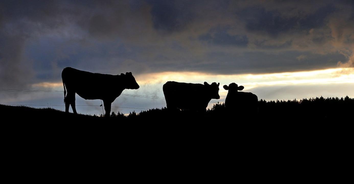 Im Gegensatz zu früher sind die Kühe m...um sind gut durchlüftet und isoliert.   | Foto: Karl-Josef Hildenbrand