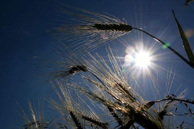 Südbadens Bauern erwarten eine gute Ernte