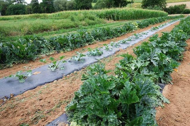 Der Klimawandel verändert den Gemüseanbau