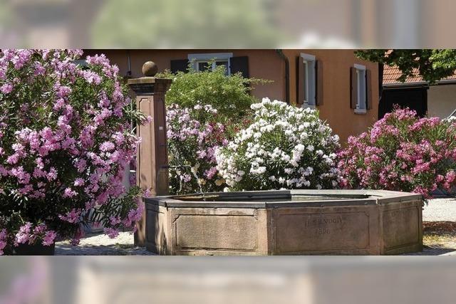 Blühende Pracht am Dorfbrunnen