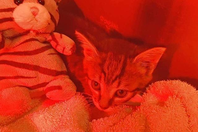 Offenburger Feuerwehr spült eingeklemmte Katze aus Kanalrohr