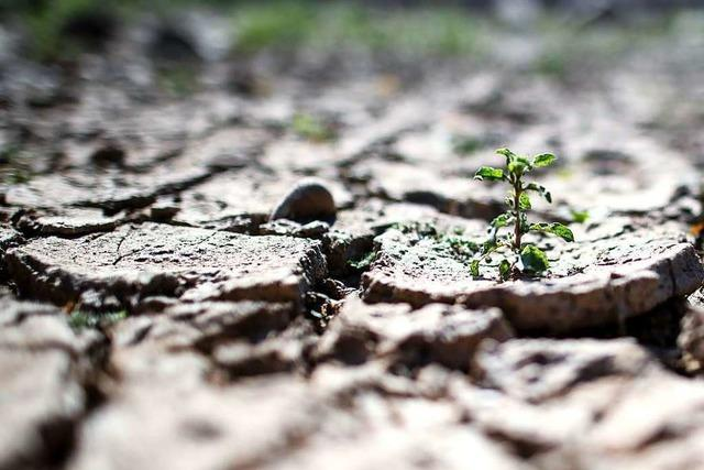 Weltklimarat fordert ein radikales Umsteuern bei der Landwirtschaft