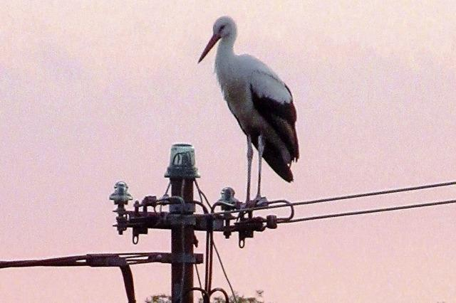 Zu Gast auf dem Strommast