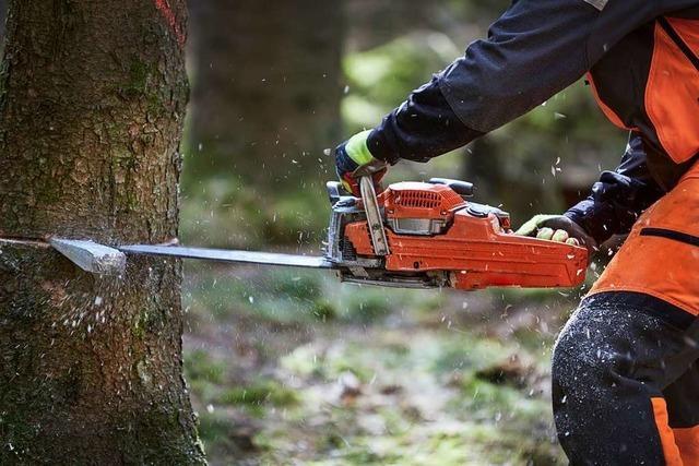 Naturschutzbeauftragte warnt vor Folgen von Baumfällungen