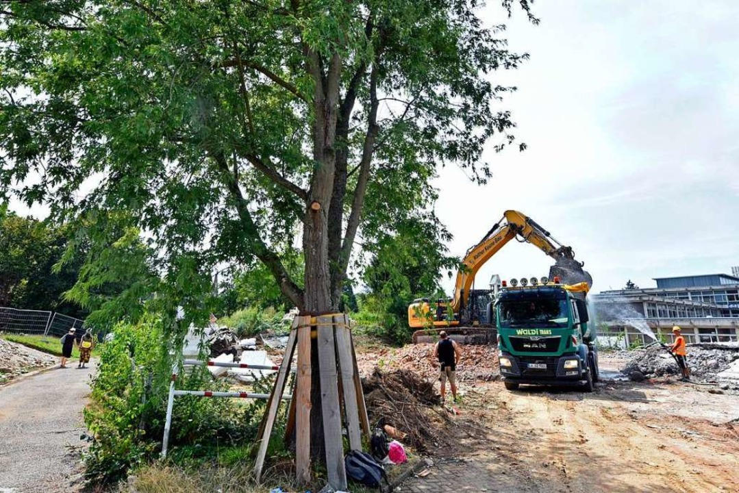 Baum 44 ist ein schützenswerter  Silbe...r soll, wenn möglich, erhalten werden.  | Foto: Michael Bamberger