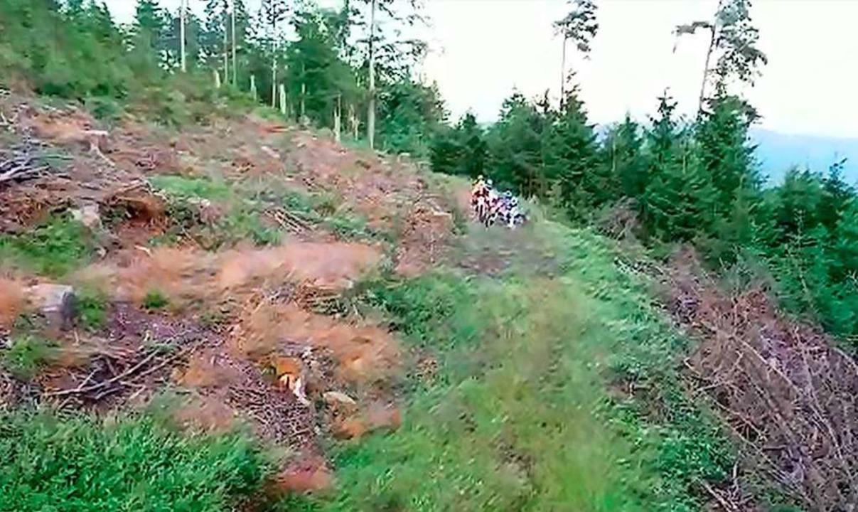 Das Standbild aus dem Video zeigt eine...ehren sie um und verschwinden im Wald.  | Foto: Privat