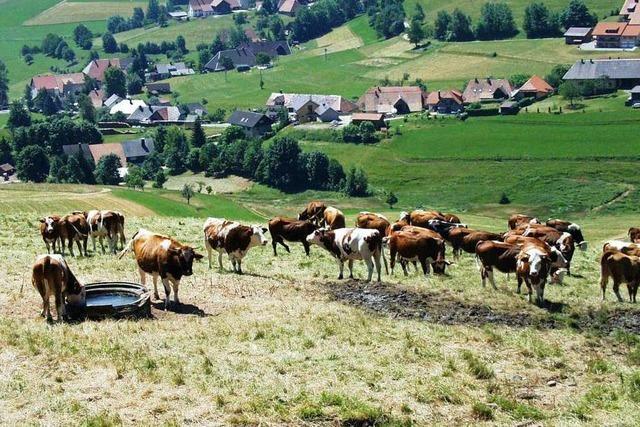 Rinder, Planeten, Kunst – so groß ist das Spektrum der Themenwege