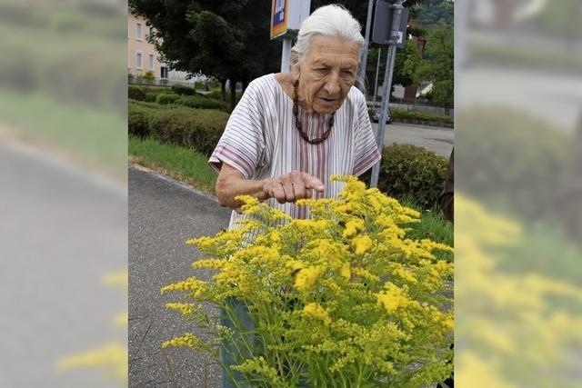 Wildblumen statt englischer Rasen