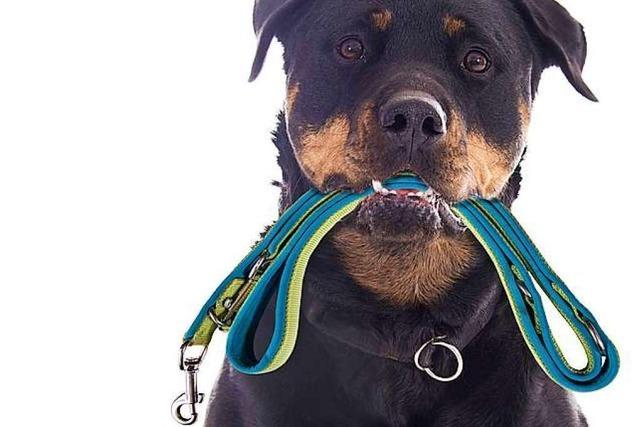 Hundehalter streiten sich in Lörrach wegen eines unangeleinten Hundes