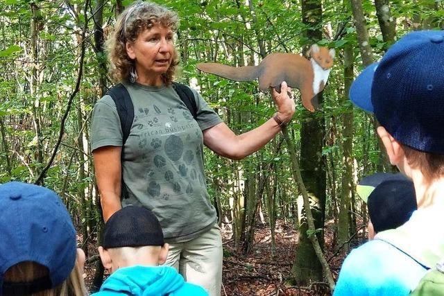 Beim Waldtag werden Pfaffenweiler Kinder für das Ökosystem Wald begeistert